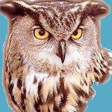 Bryden Enterprises Owl Logo